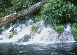 Hikers encounter these gushing springs early in the trek. Photo by William Sullivan